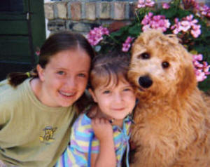 redcedarfarms-goldendoodles_image2
